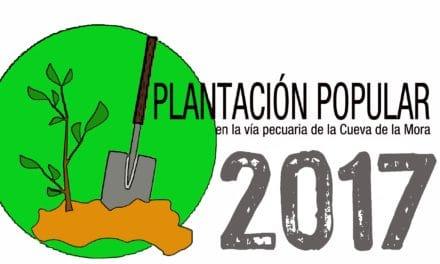Plantación popular