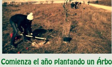Comienza el año plantando un árbol