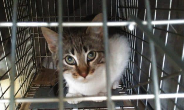 'Villafelina': «No al exterminio de gatos»