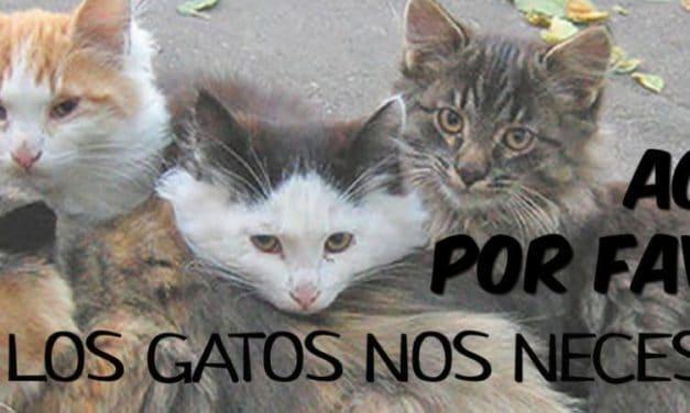 Concentración para exigir el cese de la política municipal contra los gatos