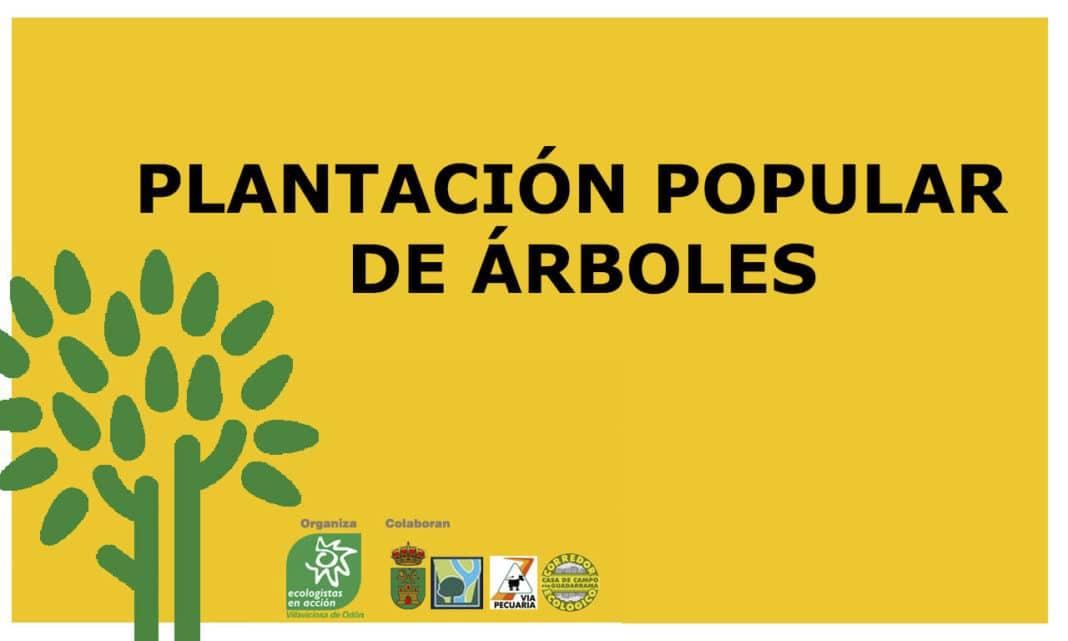 ecologistas plantación