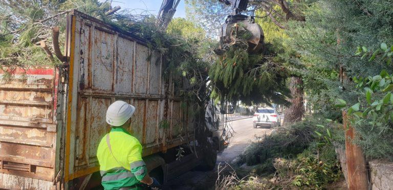 Se agilizan las labores para retirar árboles y ramas caídas