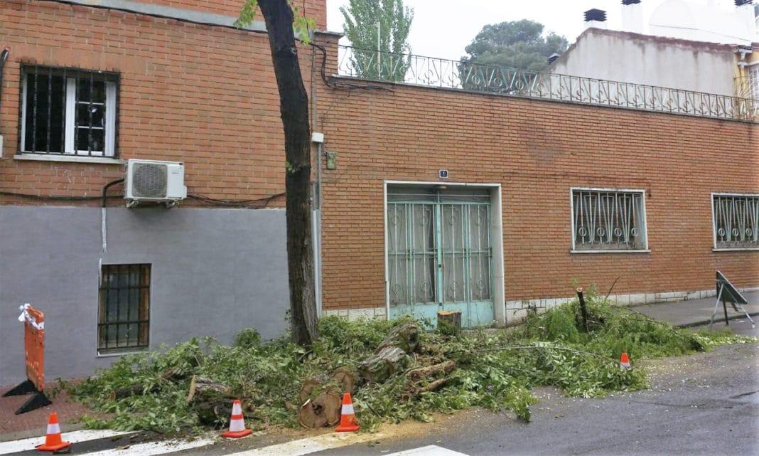 Queja tala de árboles Villaviciosa