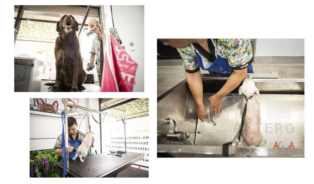 peluquería canina en Villaviciosa